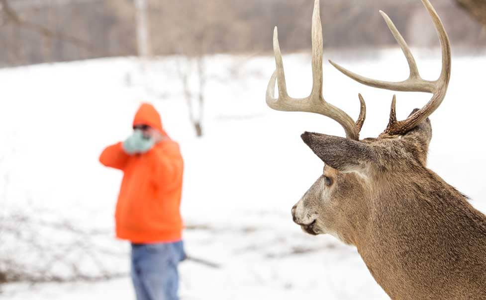 Where To Shoot Deer With Crossbow