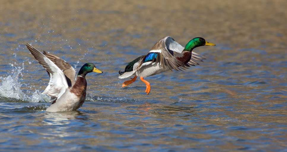 Two Hunters Are Duck Hunting In A Boat. What Is The Safest Position